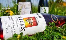 Pálava, Karel Roden a Kvevri vína... to je Vinařství Vican
