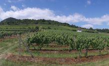 Ochutnejte nová vína z Žernoseckého vinařství